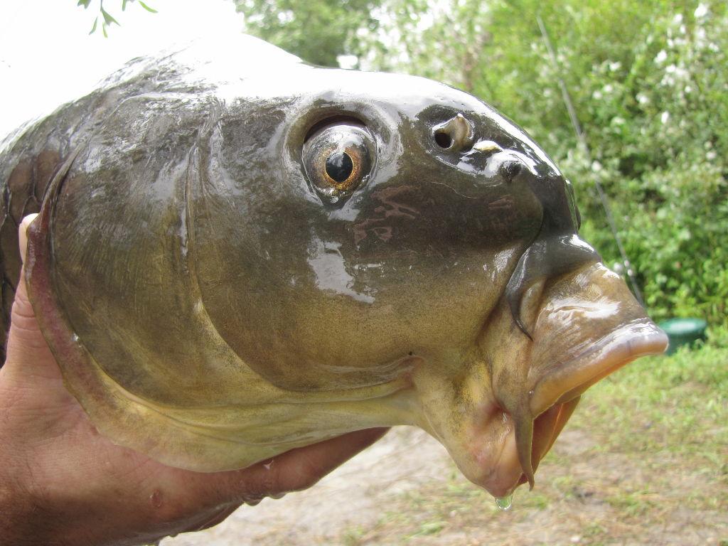 Un poisson surprenant